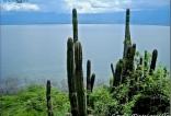 Lago Enriquillo, en el Sur Profundo, provincia Independencia.